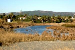 Finca Guadalquitón Sotogrande's seaside nature reserve