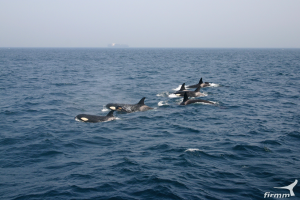 Sotogrande whale watching