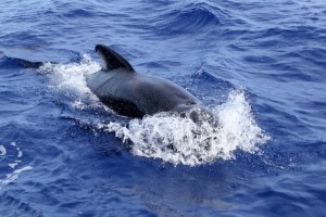 Whale watching in Sotogrande