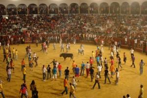 Bullfighting in Sotogrande