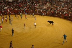 fiestas in spain bullfighting
