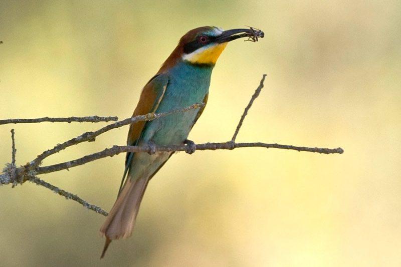 Andalucía Bird Society